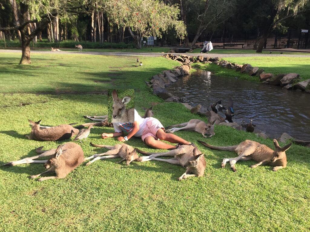 カンガルーと記念写真(Currumbin Wildlife Sanctuary)