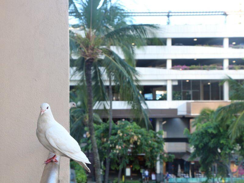 壁を越える鳩